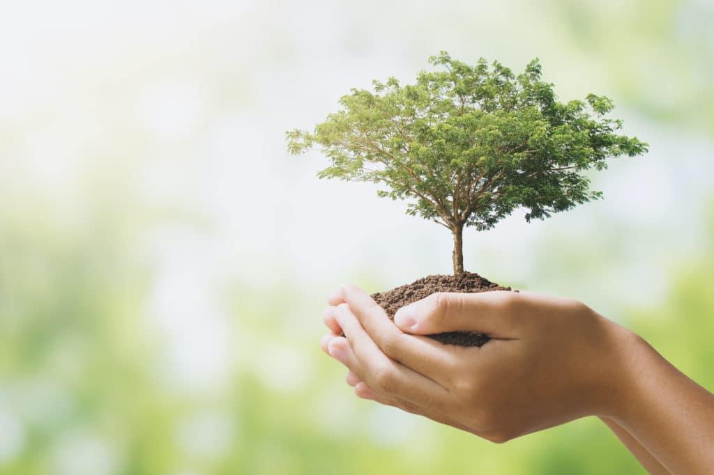 Regala un albero da piantare