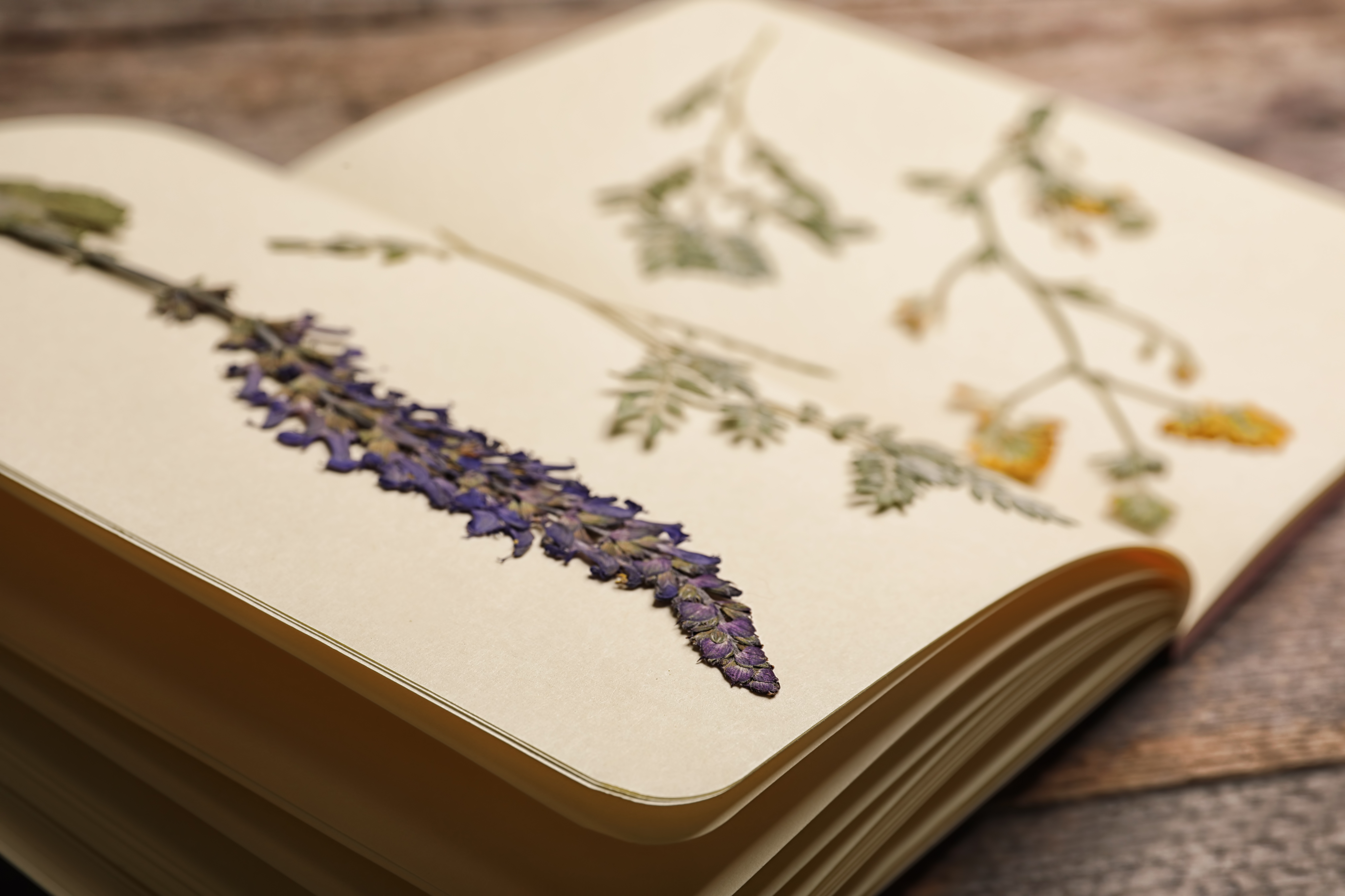 Quaderno con fiori pressati